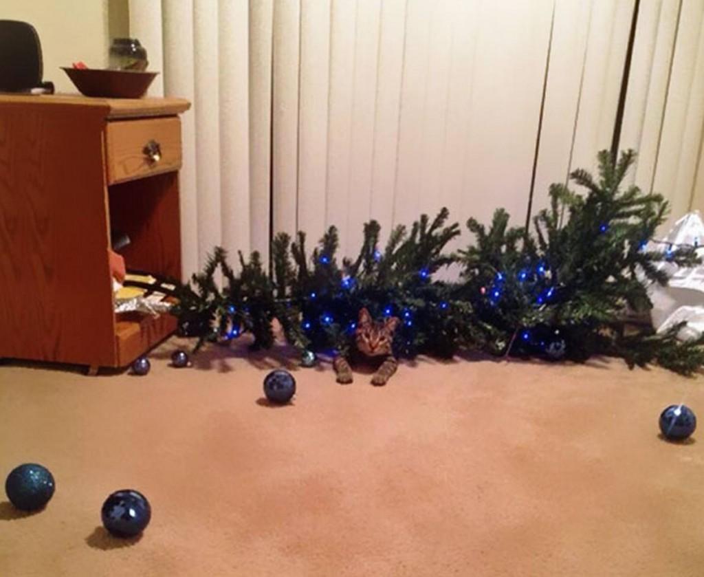 kerstboom-opgeruimd